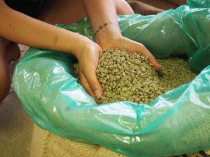 Selezione caffè verde